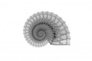 Snail spiral
