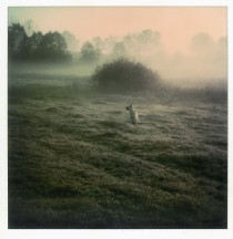 instant-light-andrei-tarkovsky-polaroid-dog